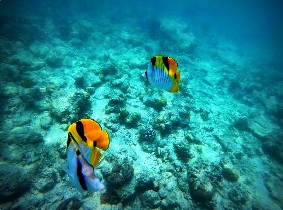 Malediven Video 1