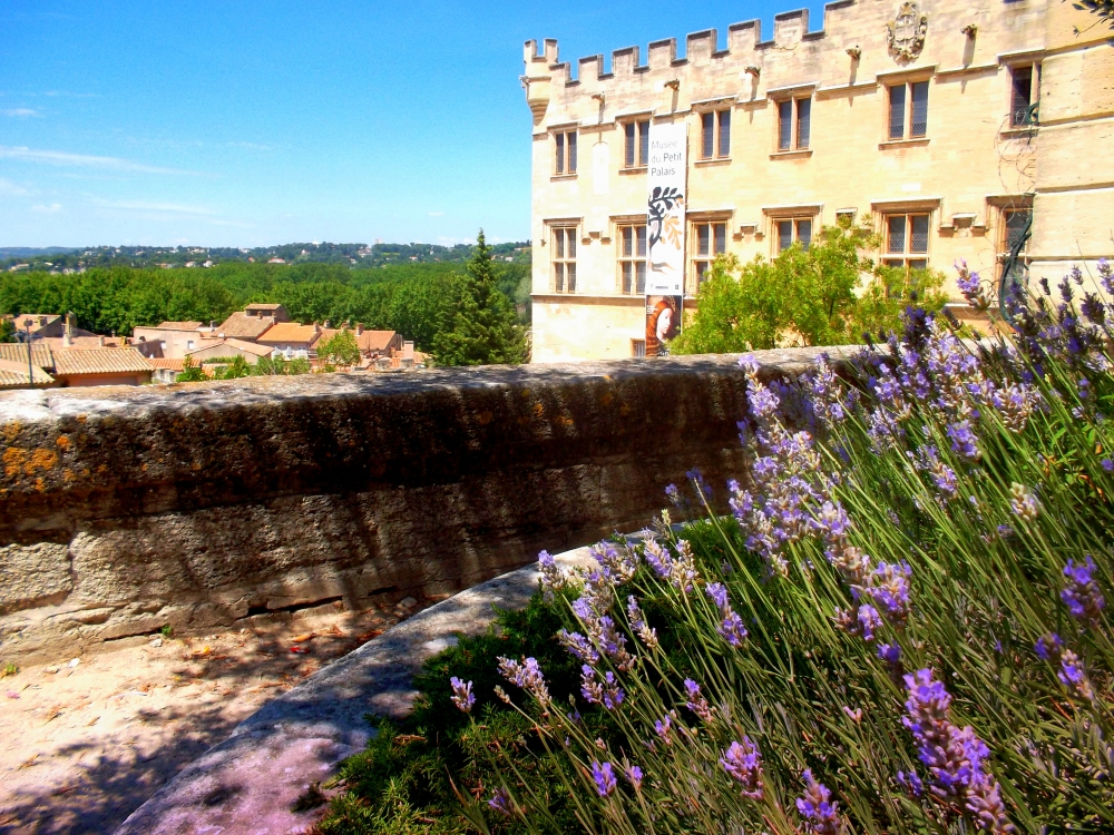 Avignon Lavendel2