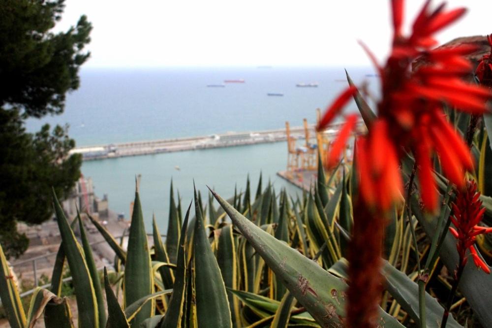 Blumen mit Blick auf Hafen - oben auf Montjuic