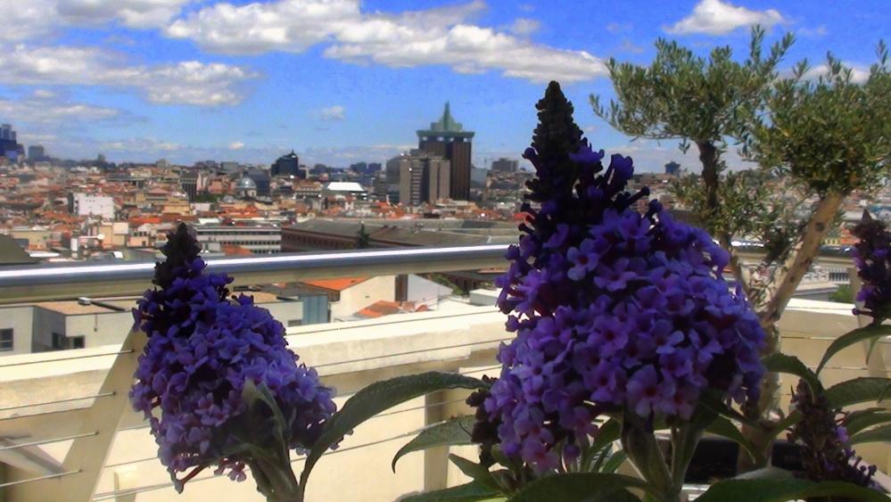 Madrid terrazas Spanien von oben Blume