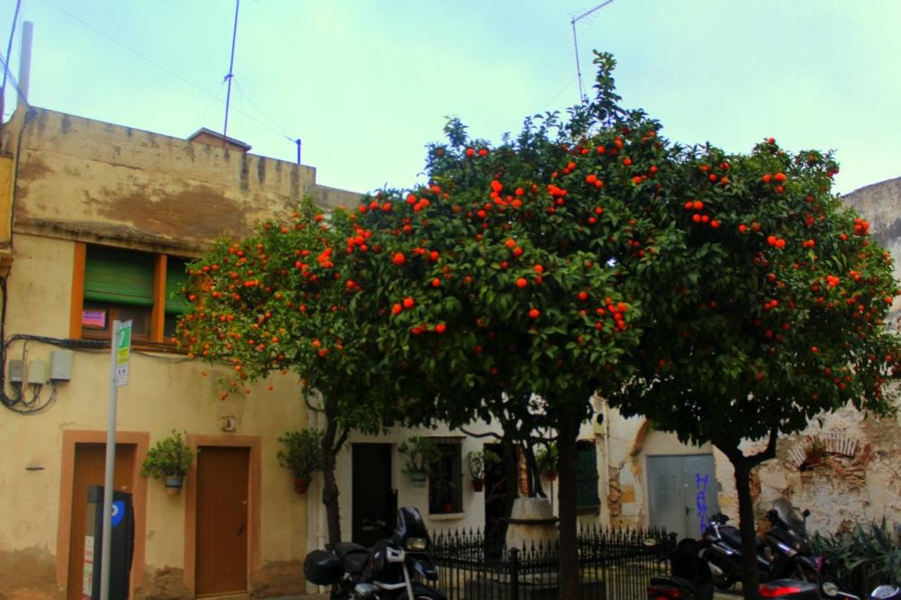 Tarragona Orangenbäume