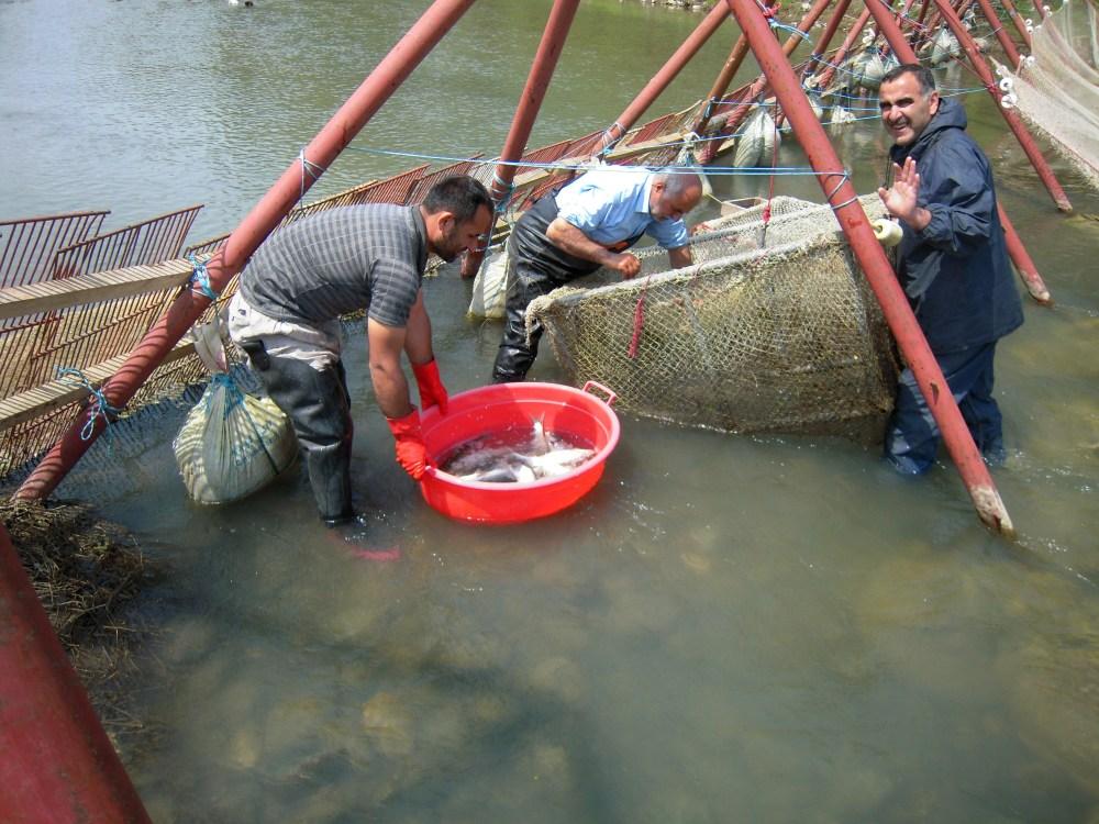 Fischfang am Bach
