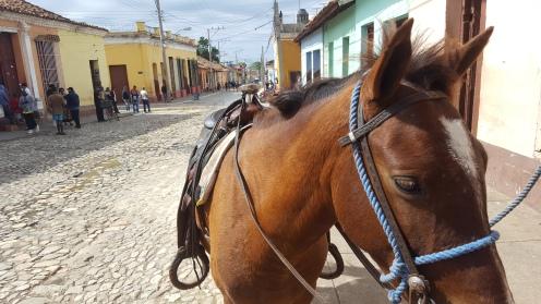 Trinidad Kuba Streets Calle Cuba Horse Pferd Old Cuba