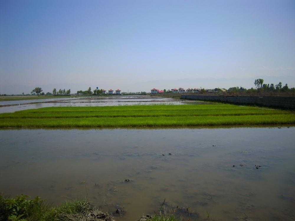 Bewässerung Feld Landwirtschaft Kaspisches Meer Iran