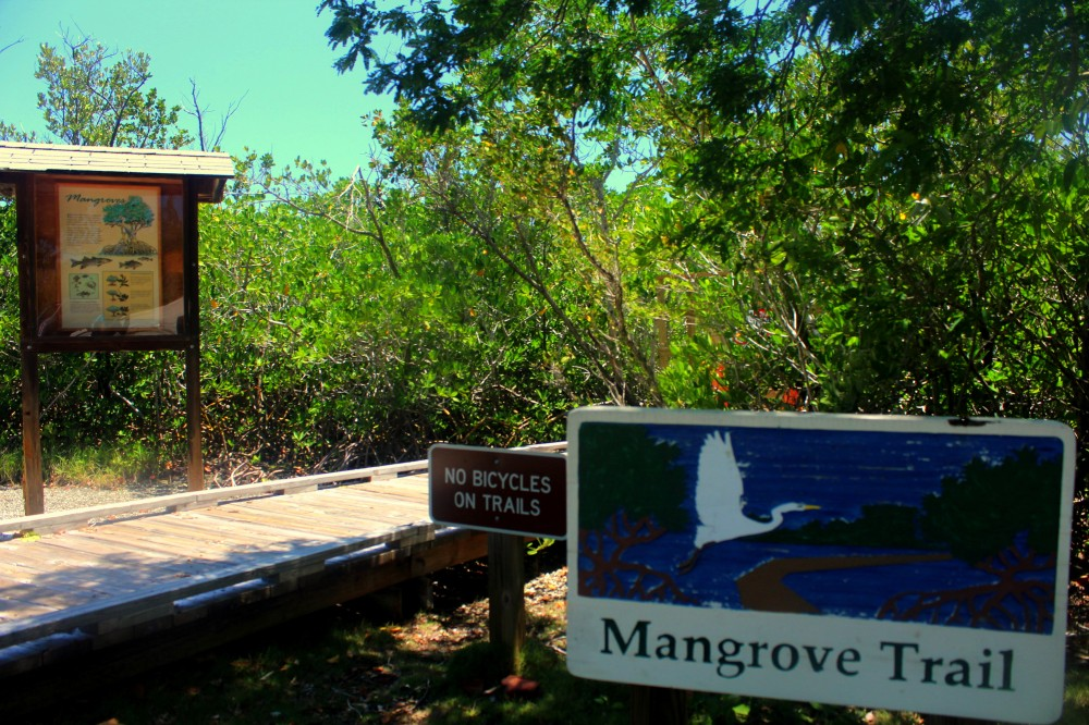 Manfroven Mangrove Trail Key Largo Florida Keys exploreglobal
