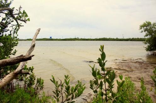 Mangroven Cape Canaveral Florida epxloreglobal