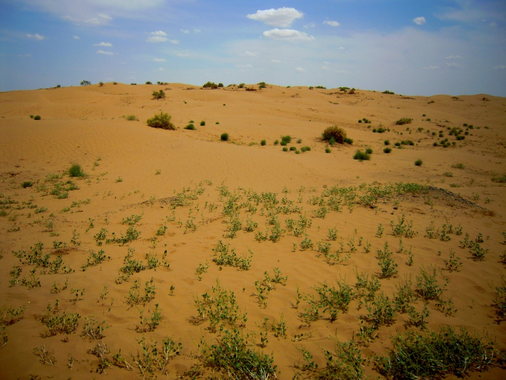 Wüste Turkmenistan