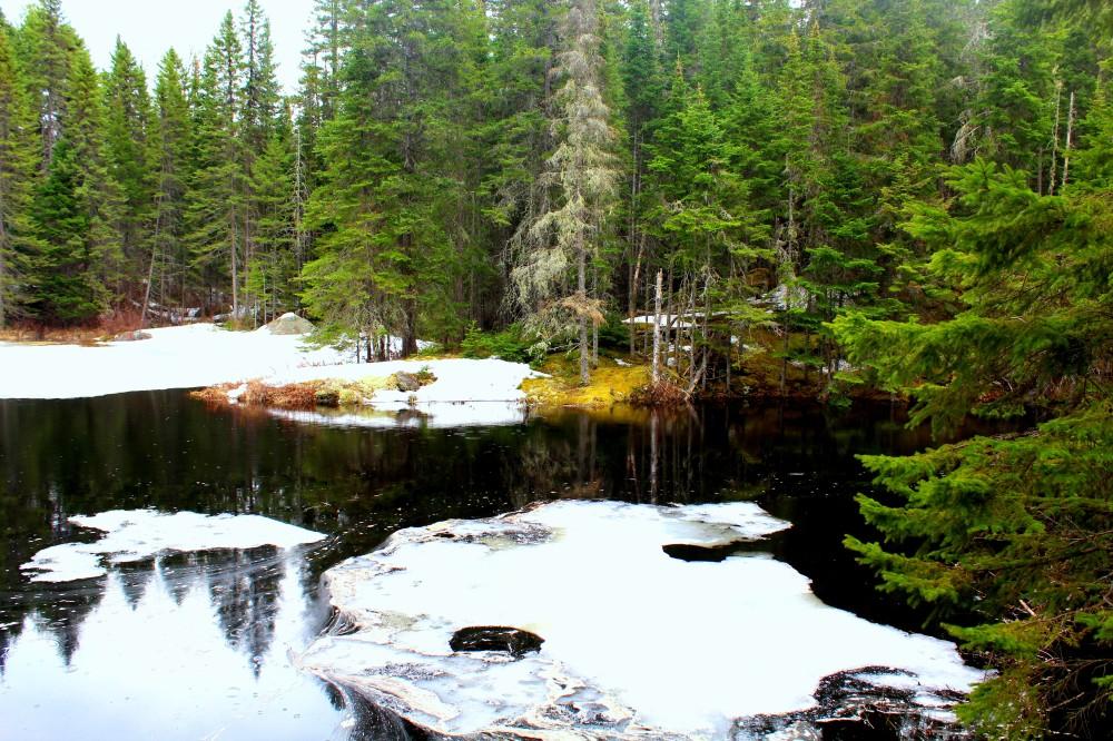 Landschaft im Algonquin Nationalpark nahe des Logging Mill Museums am Eingang des Parks, Wald Natur Bäume Fluss See Eis Kanada Canada Ontario Reiseblog exploreglobal www.exploreglobal.wordpress.com