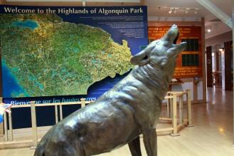 Besucherzentrum Visitor Center Highlands of Algonquin Park Wolf Natur Walf forest Reiseblog exploreglobal www.exploreglobal.wordpress.com
