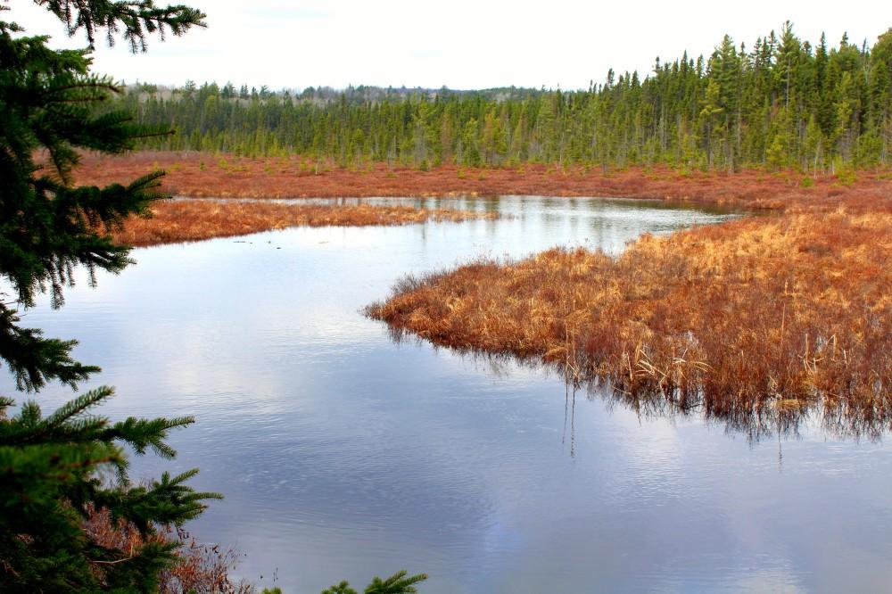 Oxtongue River schlängelt sich durch den Wald im Algonquin Nationalpark Ontario Kanada Canada forest Fluss Reiseblog exploreglobal www.exploreglobal.wordpress.com