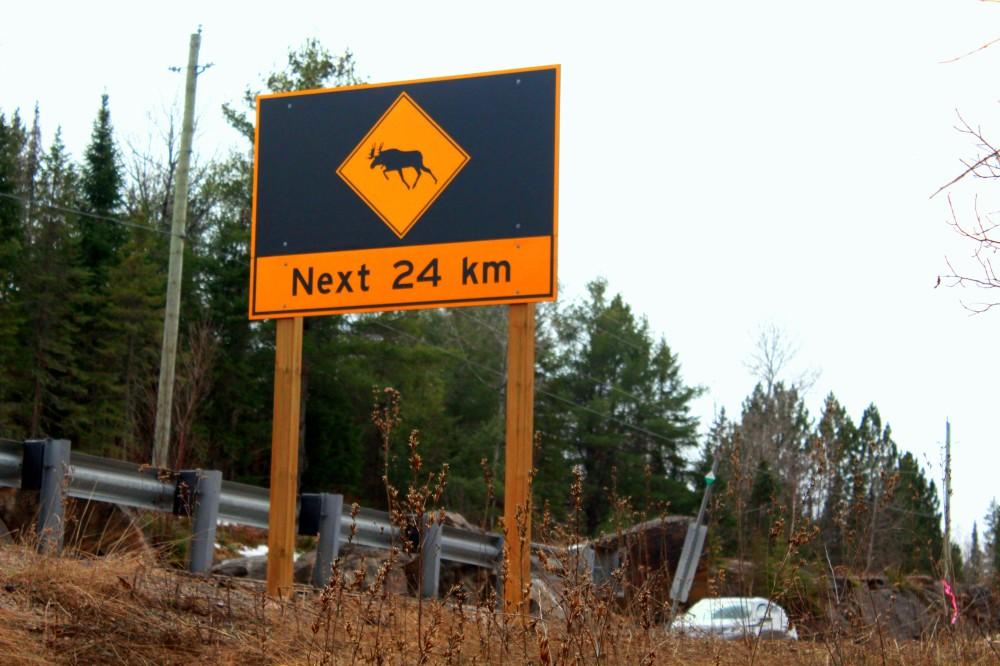 Schild mit Warnung vor Elchen auf der Strecke im Algonquin Nationalpark Ontario Kanada Canada moose Wald forest Reiseblog exploreglobal www.exploreglobal.wordpress.com
