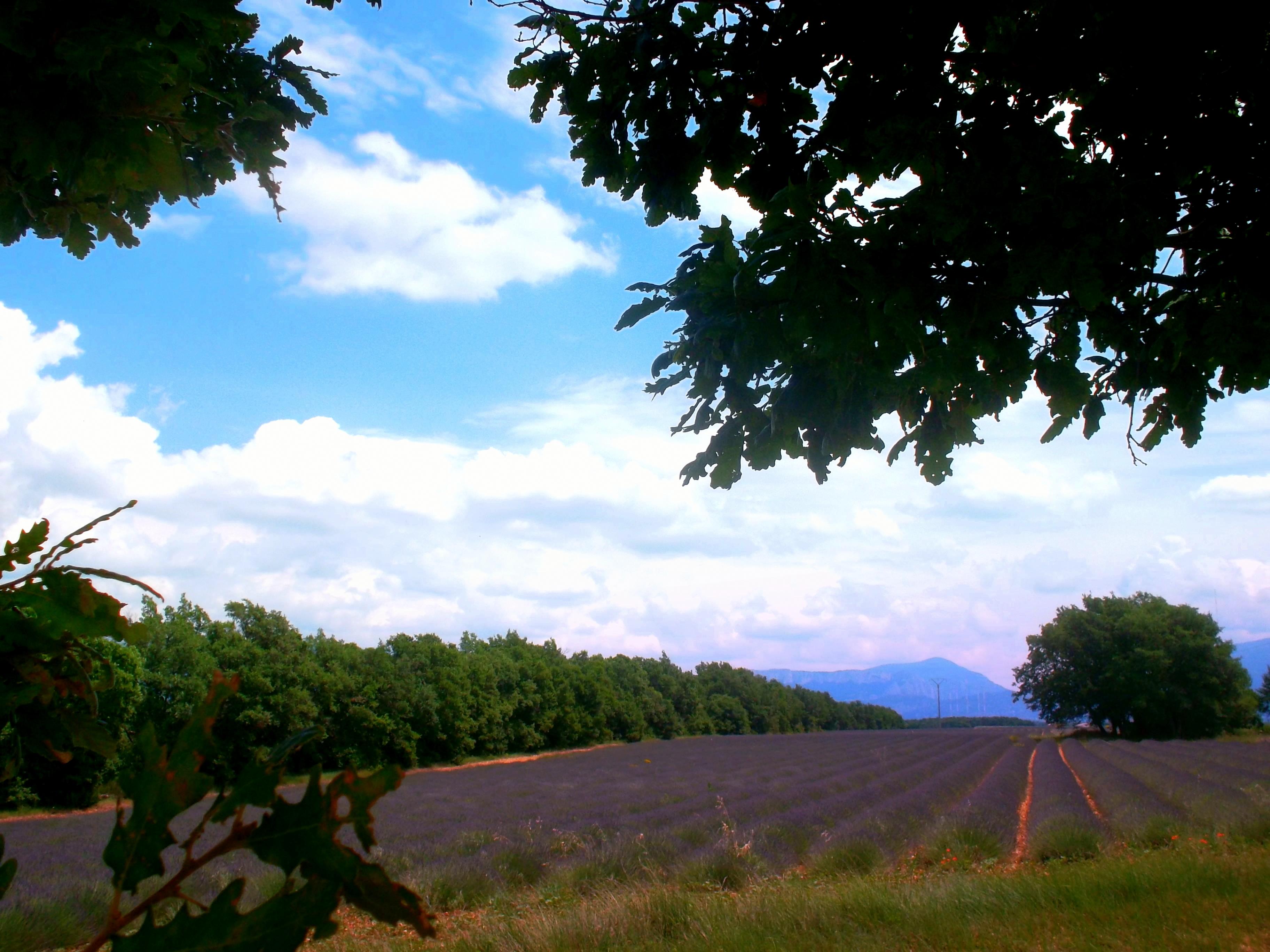 Lavendel Digne-les-Bains Umgebung Reiseblog Frankreich Südfrankreich Mietwagen Tour www.exploreglobal.wordpress.com