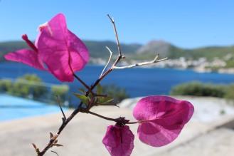 Bouganvilleen blühen noch im Oktober rund um Agia Marina - Reisebblog Exploreglobal