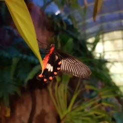 Singapur Airport Changi Schmetterling butterfly Terminal Garten Reiseblog Exploreglob