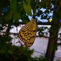 Singapur Changi Airport Halle Garten Baum gelber Schmetterling butterfly Exploregloba