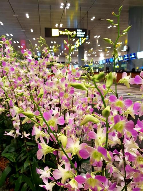 Singapur Changi Airport Orchideen Transfer Halle Terminal Reiseblog Exploreglobal