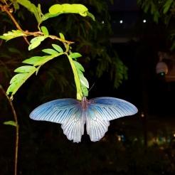 Singapur Changi Airport Schmetterling butterfly Garten Halle Zoo Reiseblog Exploreglo