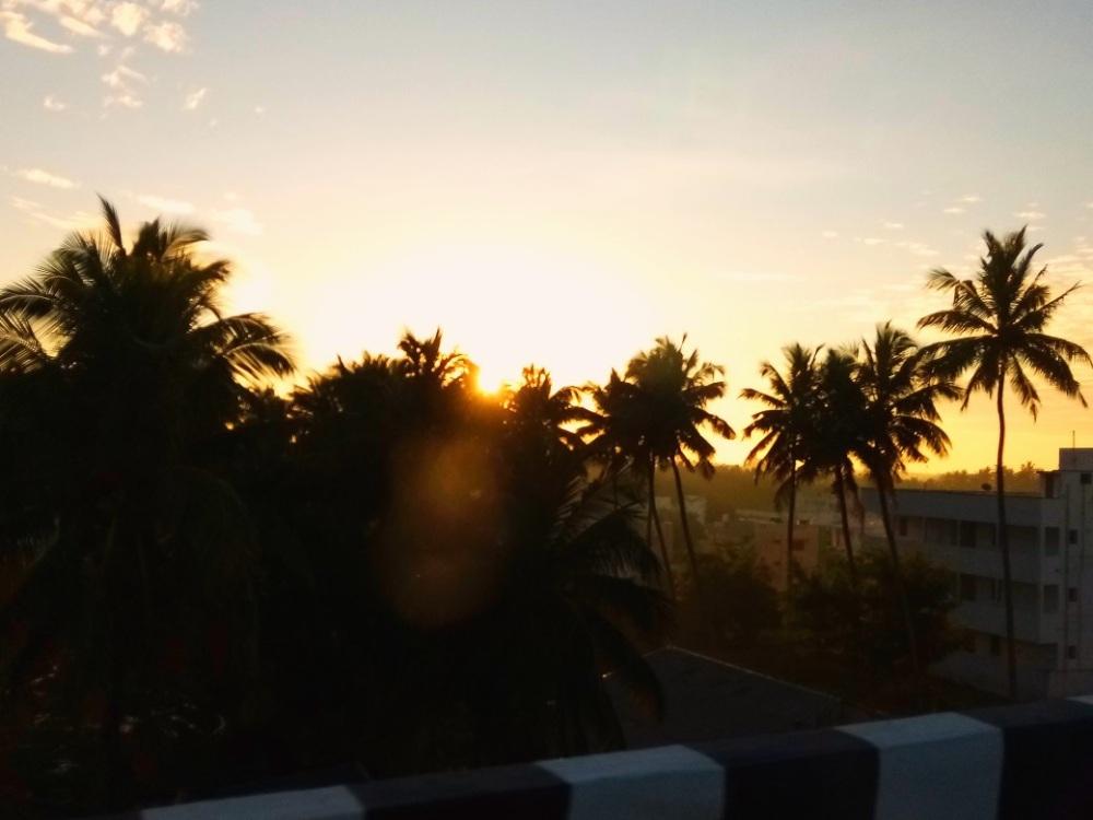 Palmen Südindien Tamil Nadu Tirumoorthy